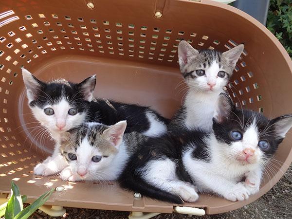 ノラ猫の産んだ子猫たち