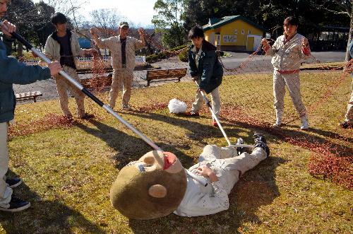 麻酔銃で眠らせたゴリラ役を捕獲しようとする職員たち=愛知県犬山市の日本モンキーセンター