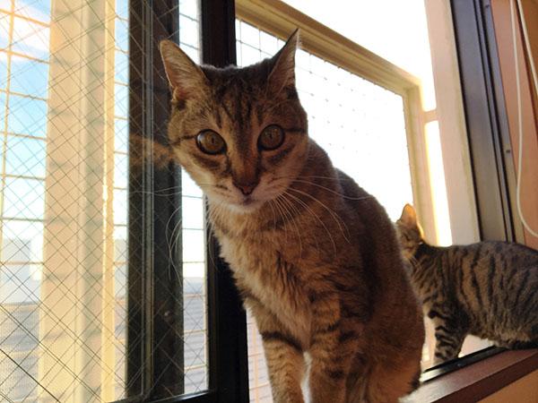 窓辺で日光浴を楽しむ我が家のマオ(18歳)