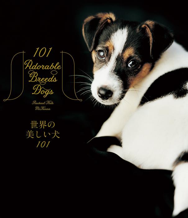 パイ インターナショナル(2,900円+税)