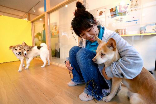 オープンした保護犬の譲渡センター=東京都世田谷区桜丘