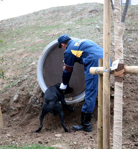 土管の中に隠れた行方不明者を捜す訓練をする警察犬=東京都東大和市