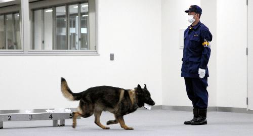 犯人の臭いと同じ臭いの布を選別する警察犬=東京都東大和市