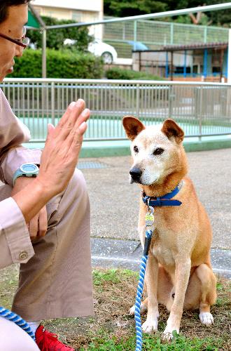 寄付金のおかげで殺処分を免れ、新しい飼い主を探しているラッキー(推定10歳)=名古屋市千種区