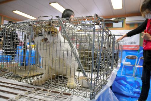 手術をするため順番に並べられた猫=香川県三豊市の志々島