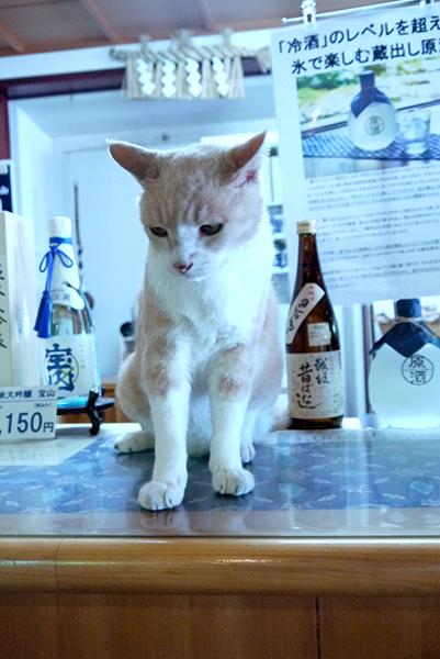 「ようこそ宝山酒造へ!」