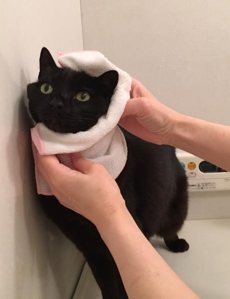 ほかほかタオルでゴシゴシ拭かれるのが好き。