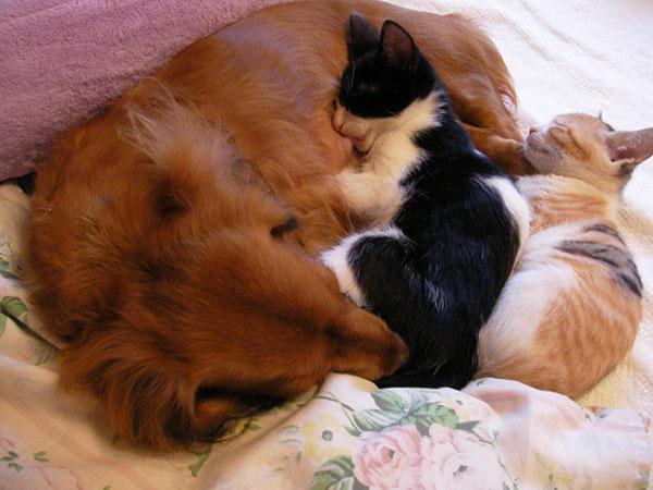 わが家の犬(明日香)と子猫たち