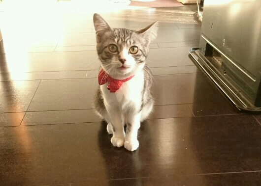 実家の子猫。待ってたの?