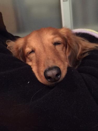 昭さんの腕枕で眠るレイニー