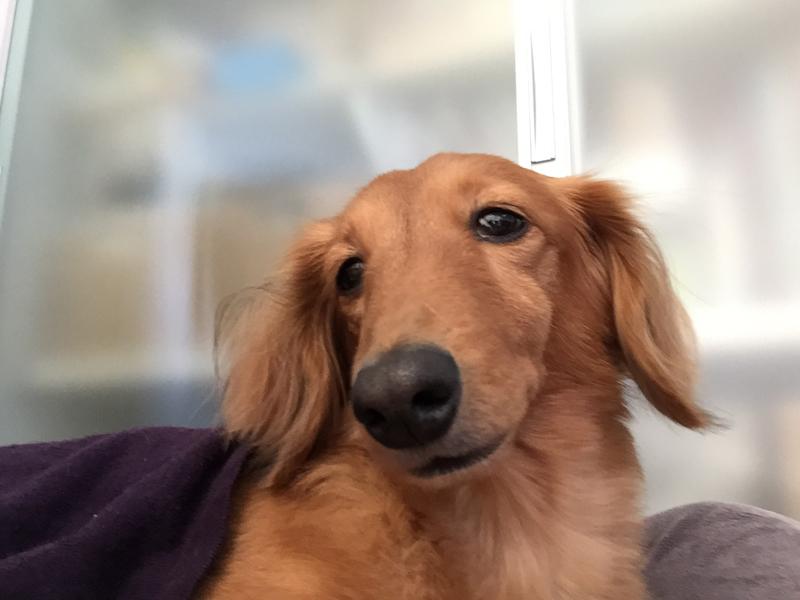 レイニーの特徴の長い鼻