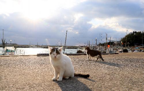 藍島の猫たち