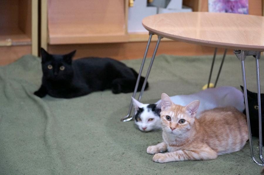 猫カフェスペースでくつろぐ猫たち