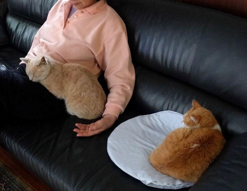 お母さんときなこ(左)とおちび3ショット