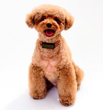 富士通が昨春に始めたサービス「わんダント2」。首輪につけた小型センサーが犬の動きをとらえ、飼い主に知らせる=富士通提供