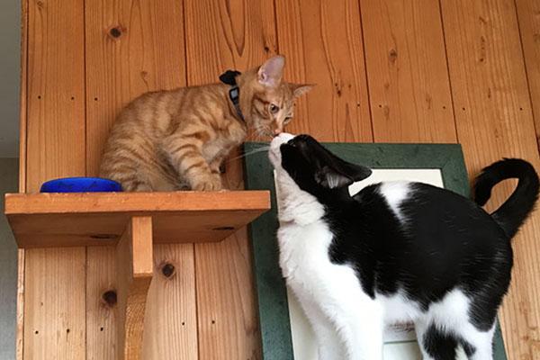 もち(左)&ねこず。猫のあいさつ