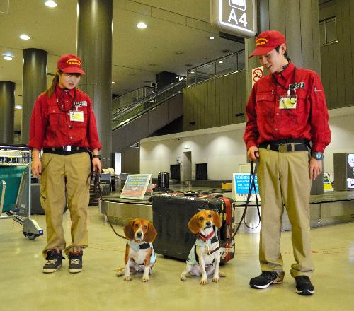 デビューした検疫探知犬のメグ(左)とボタン=成田空港