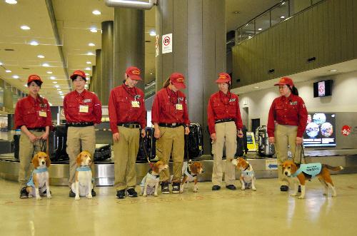 勢ぞろいした成田空港の検疫探知犬6頭。右から3頭目がメグ、4頭目がボタン
