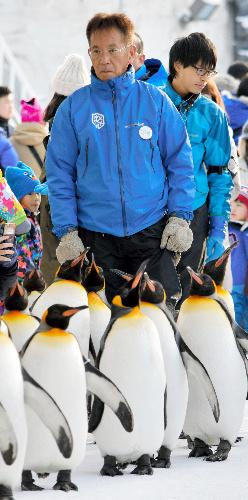ペンギンの散歩について歩く坂東元園長=1月29日、北海道旭川市の旭山動物園
