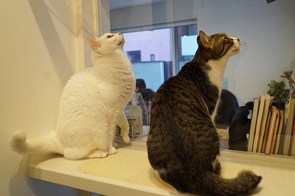 猫舎は隔離された安心感と同時に、外が見えるので猫たちの好奇心も満たす構造に