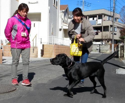 マリンと散歩するパピーウォーカーの庄司里絵さん(右)。東日本盲導犬協会の栗本萌子さんが成長ぶりを確認する=宇都宮市内