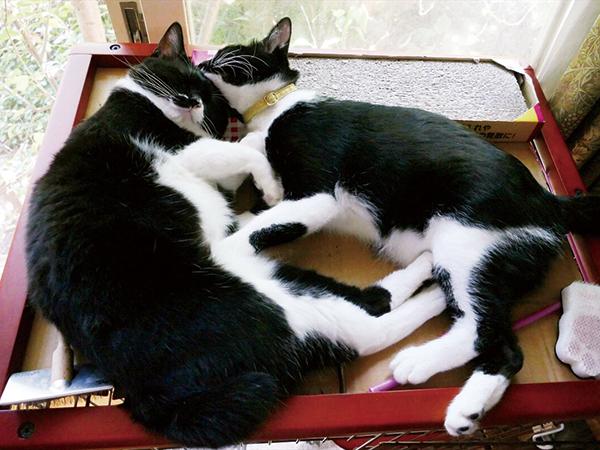 生後3カ月で、一緒に引き取られたピアノ(右、現在はチェリー)とフォルテ(同ベリー)姉妹