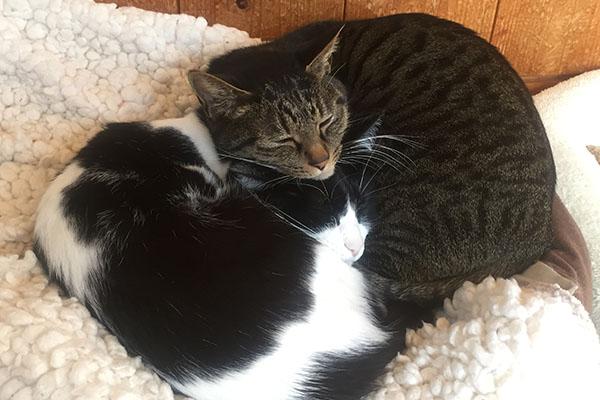 ねこず(左)と先住猫もみひろ