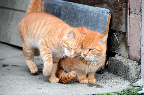 温泉街の片隅では猫が寄り添い合っていた=山形県米沢市の小野川温泉