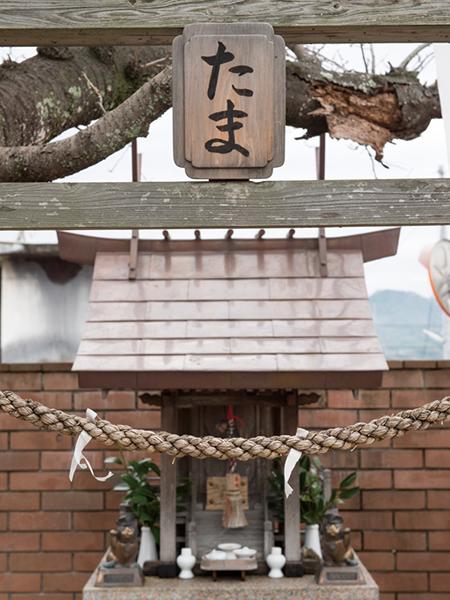 駅構内にある「たま神社」には、ウルトラ駅長たまが祭られている