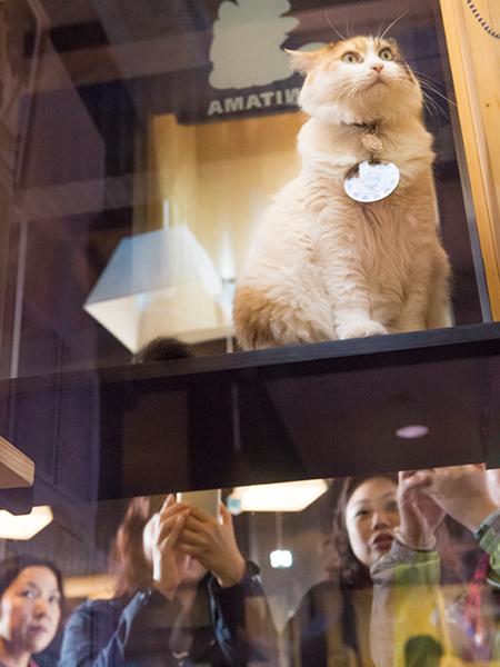 駅長室から、観光客を見つめるニタマ