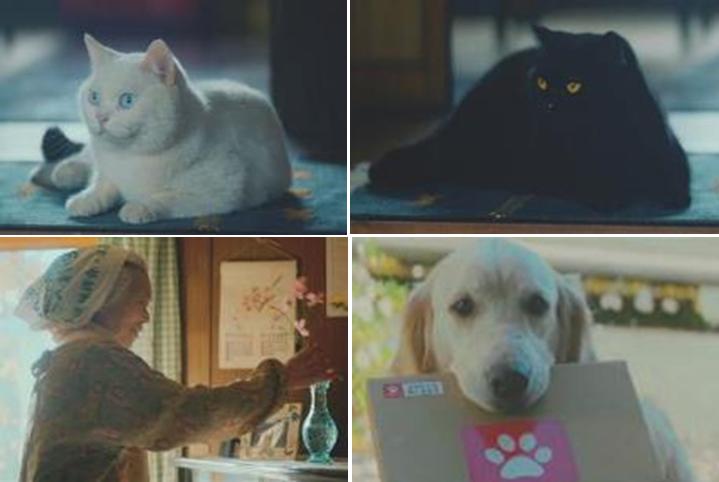 左上:白猫役のたまお 右上:黒猫役のジャック 左下:おばあちゃん役の外山睦子さん 右下:ゴールデンレトリバーのフェスタ