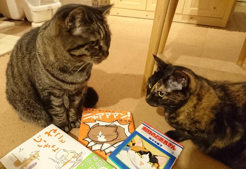 猫らに本のそばに座るようお願いしたら、しぶしぶ受けてくれました…