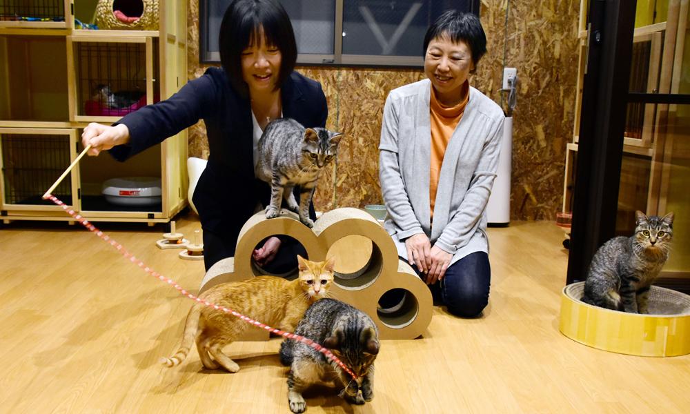 元気いっぱいの保護猫と遊ぶ森信子さん(左)と井上恵津子さん=福岡市博多区