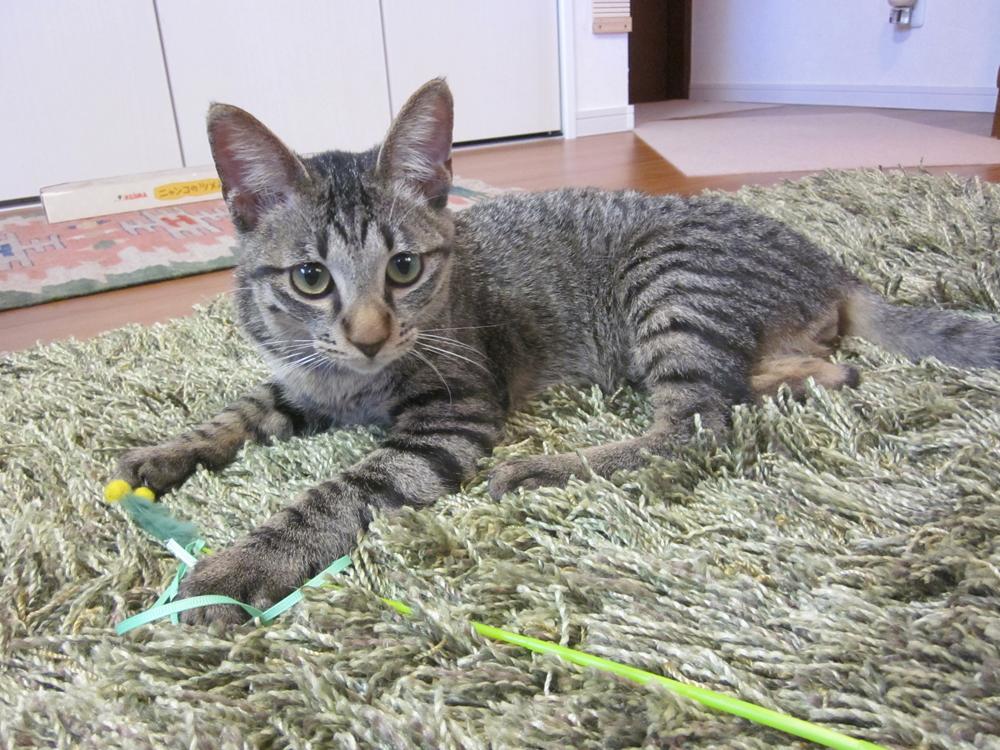 シャギーのカーペットの上でタビオと遊んでしまった