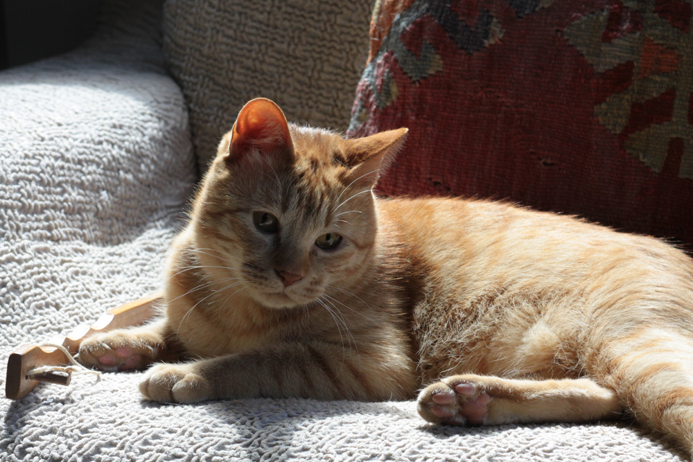 先住猫のマルオ