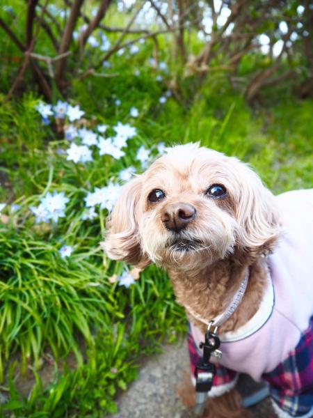 いろんなお花が咲いて、春の香りがいっぱいだワン!