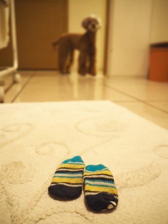 バスマットの上で哀愁漂う靴下