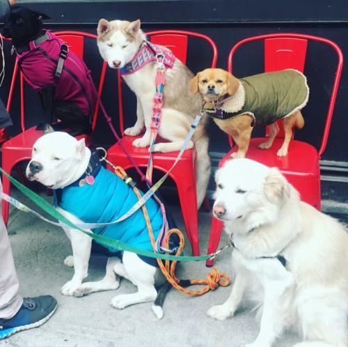 個性豊かなニューヨークの犬たち