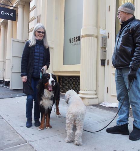 ニューヨークの犬たち