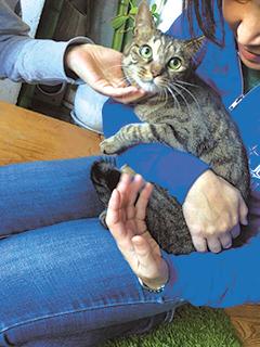 犬猫の里親会(譲渡会)も定期的に開催。詳しい開催情報や参加する動物の情報も、サイトに公開されている