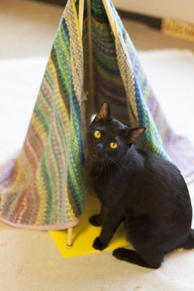 保護猫カフェで大人気だったテント=撮影:五十嵐健太