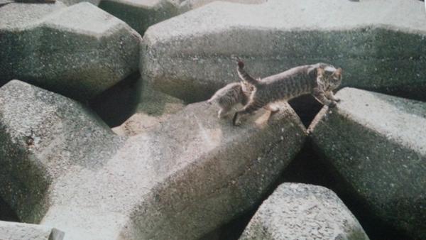 テトラポッドにいたニャン(子猫は別の人にもらわれた)