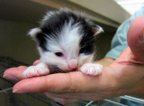 保護され飼い主を求めている子猫=いずれも旭川市動物愛護センターあにまある提供