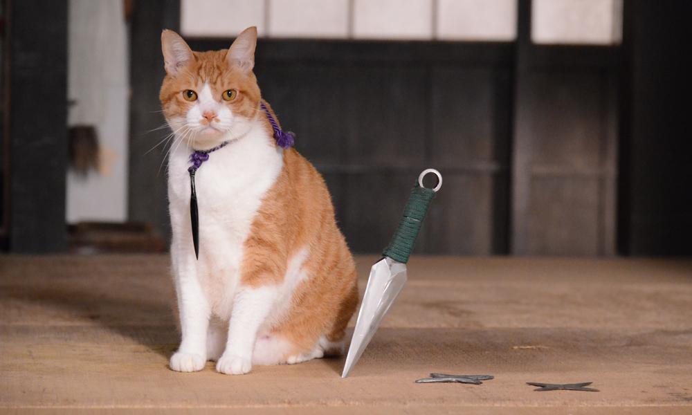 (C)「猫忍」製作委員会