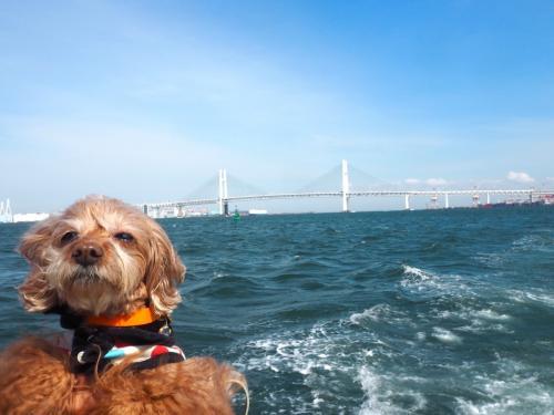 ベイブリッジとぷりたん。「ははは早く撮ってぇぇ……」。揺れる船にビビりまくり。