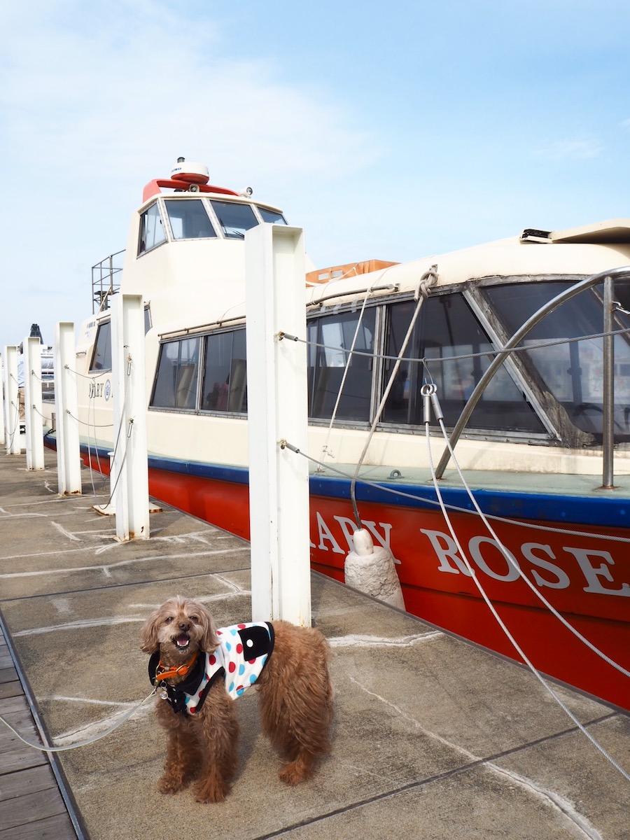 大桟橋の埠頭から乗船できる「横浜港内クルーズ」。この日乗ったクルーズ船と、はいチーズ!