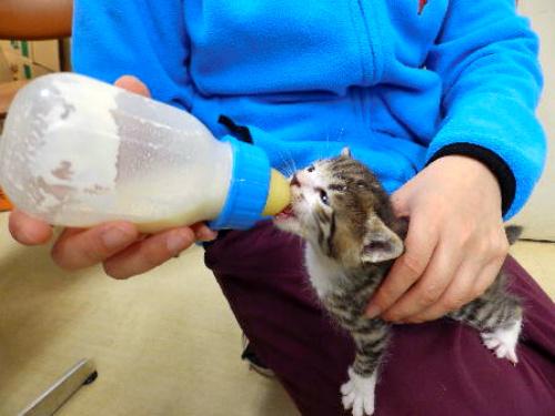 千葉県動物愛護センターに保護された子猫=千葉県衛生指導課提供
