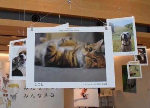 「みんなイヌ、みんなネコ」(昨年9月、東京都渋谷区)
