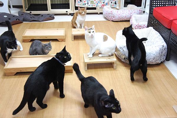 昨年ついに保護猫の譲渡100頭を達成! 100頭目は、初代店長のサン君でした「99頭におうちが見つかるのをサンはずっと見てきましたから、そろそろサンの番だろうと思って、引退させ私の家族になりました」と小倉さん