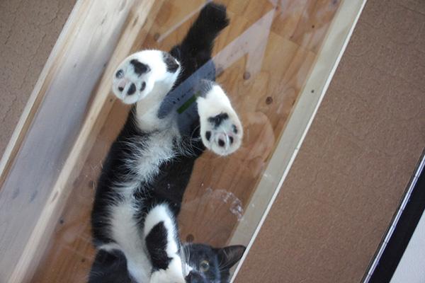 とにかく猫たちは空中散歩が楽しい様子。全力で駆け回る中、なんとか肉球を激写!